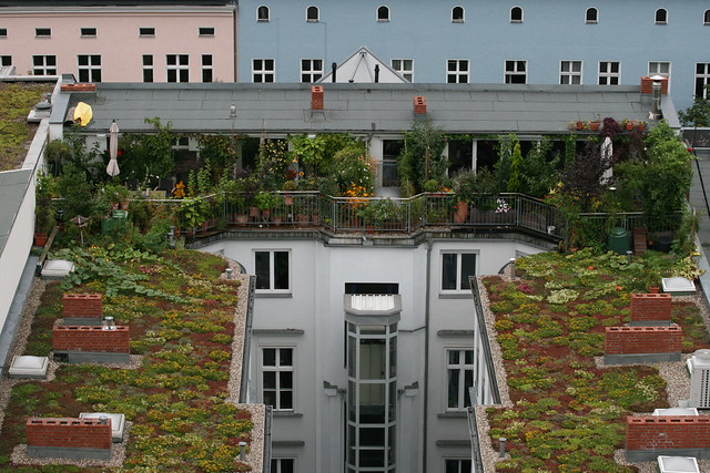 Garden at a roof in Berlin in Keithsstrasse