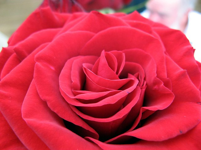 A rose arose