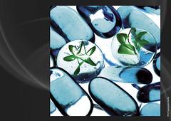 VETRO COLORATO (Francesco Carta) Tags: flower color blu fiori bianco vetro silicio
