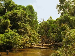 Mt Molloy River (rpiker101) Tags: river australia queensland fnq mountmolloy