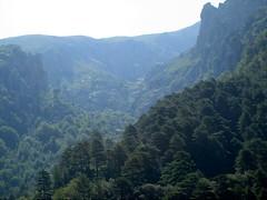 Ravin de Coracchia depuis Bocca Castellucciu