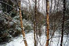 Winter Woods (Joe McGilloway) Tags: sigma1020mmf456exdc
