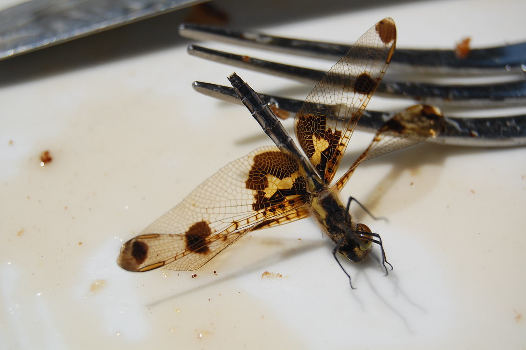 Dragonflies and syrup do not mix well