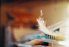 feather (Liis Klammer) Tags: film analog 35mm estonia bokeh feather zenit eesti zenitet