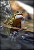 (Nikographer [Jon]) Tags: lighting light pond nikon flash maine july frog d200 jul 2007 cls lightsource sb800 nikond200 nikographer strobist specanimal fav12007 remoteoffcameraflash 20070706d20087360 nikographerjon jss20081