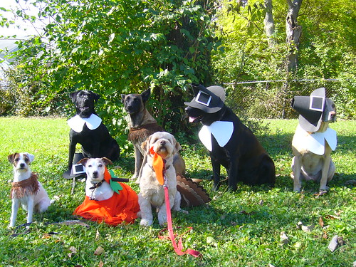 black labrador retrievers - halloween
