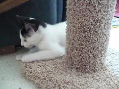 Kittens 020