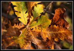 Colors Of The Seasons 2 (Wenspics) Tags: autumn red brown tree fall nature leaves yellow season sticks oak bush branch acorns wpt