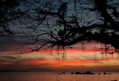 Sunset at Paqueta (Quasebart ...thank you for 4 Million Views) Tags: sunset brazil rio brasil riodejaneiro nikon sonnenuntergang d70 nikond70 creative paqueta brasilien prdosol moment breathtaking guanabara 1870 5photosaday creativemoment platinumphoto bemflickrbembrasil
