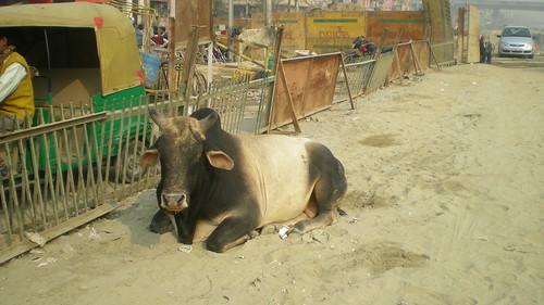 India 027 by i_am_psyon.