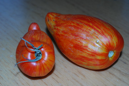 Striped Roma Tomatoes