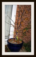 Freddie's Tree in Autumn