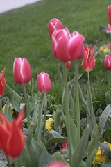 mart 2007 (Erdin Erdoan) Tags: stanbul laleler ehri