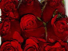 A gorgeous day! Red is so beautiful, isn't it? (Priscila Darre) Tags: bear red roses brazil love brasil day sopaulo dia dos present valentines paulo so namorados urso