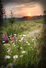 Leading (fetopher) Tags: life flowers sunset mountain flower washington northwest screensaver dusk country blogged wildflowers d200 hockinson