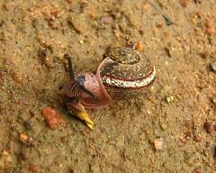 JPNagar4Aug Snail