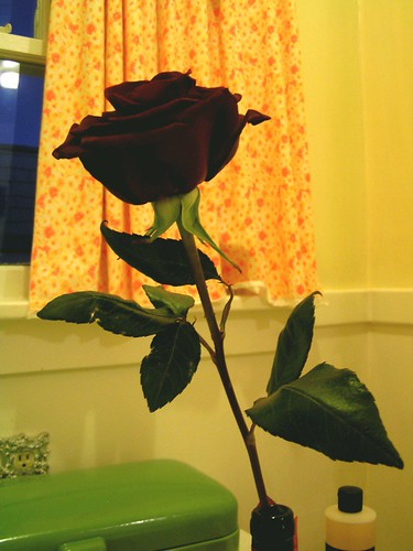 """he slides a single white rose beneath my stall"""