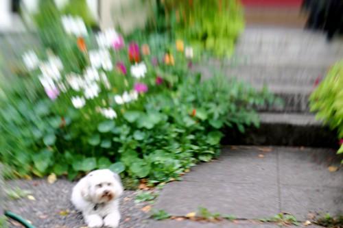 Wink in El Jardin