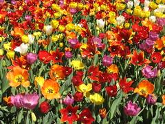 Botanic Gardens - Spring Festival 2007