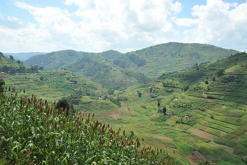 7e. Typical scene, leaving Rwanda