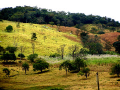 Greener Pastures (osvaldoeaf) Tags: trees brazil plants mountains green nature grass leaves rural landscape cattle hills pastures cerrado scape goinia husbandry bucolic gois idilic wonderfulworldofflowers