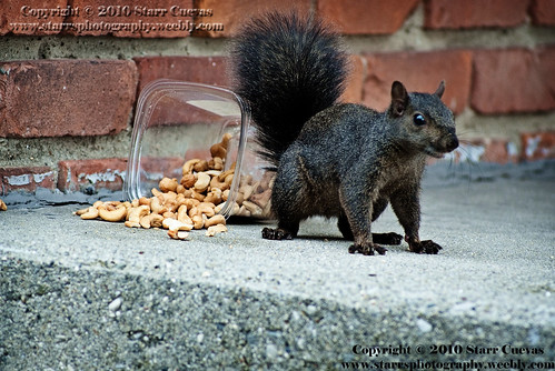 Squirrel 0171