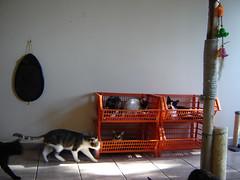 cats room (sosgatinhos) Tags: cats love cat toy furry feline room gato kitties felino shirley shelter manson adoption adoo peludo adote abrigo animalwelfare catlover sosgatinhos