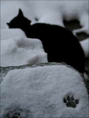The cat was near... (Ferran.) Tags: winter pet cats pets snow nature cat nieve gatos catalonia gato catalunya gat neu ripolles gats queralbs