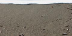 menomale (banned) Tags: sea beach sand mare foam spiaggia rena schiuma bagnasciuga