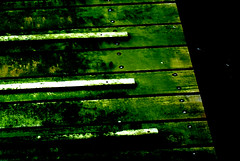 mossy floor boards (sunil_kathare) Tags: boards floor mossy