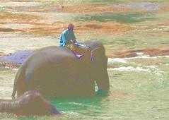 pinnewala_mahtoot (willster1000) Tags: waterfall python elephants srilanka hindu kandy hindutemple pinnewala teapicking mahtoot