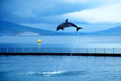 High Jump (dvq) Tags: morning blue sea sky cloud white beach water bay jump dolphin philippines manila subic 2007 naturesfinest animalkingdomelite superaplus aplusphoto diamondclassphotographer naturewatcher worldphotodoc2007