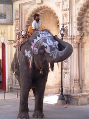 Ramu Gets His Groove On (red_red_robyn) Tags: travel india elephant animal paint backpacking archway rajasthan udaipur mahout