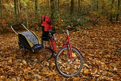 Bike in leaves I