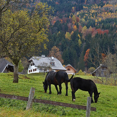 Idyll ~ (rotraud_71 away again ~) Tags: autumn trees horses forest fence meadow wolfgangsee salzkammergut farmerhouse