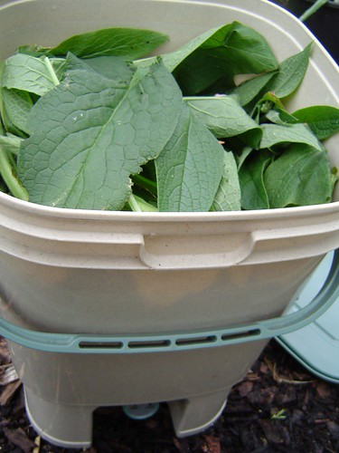 Bokashi bucket with comfrey