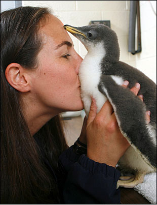 Kiss the Penguin