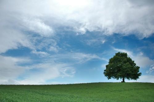 フリー画像| 自然風景| 樹木の風景| 草原の風景| 雲の風景| スイス風景|      フリー素材|