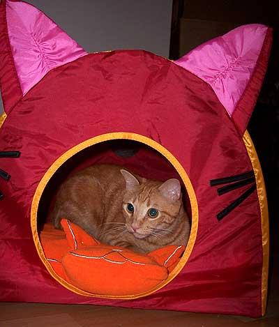 cat_tentLR3