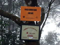 nuang20