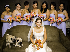 "Wedding, Weddings, Bride, ""Bridal Party"", ""Wedding Photography"" (smoothdude) Tags: nyc bridge wedding beautiful bride bridesmaids pugs whitedress bluedress wwwdanielkriegercom newyorkcityweddingphotographer newyorkcityweddingphotography nycweddingphotography creativecomments brooklynweddingphotography brooklynweddingphotographer manhattanweddingphotographer manhattanweddingphotography"