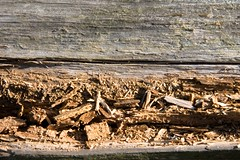 Chipping Railing (teilovesmini) Tags: wood railing chipping newhopepa