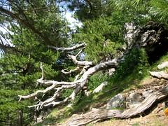 Dans la forêt de Tova