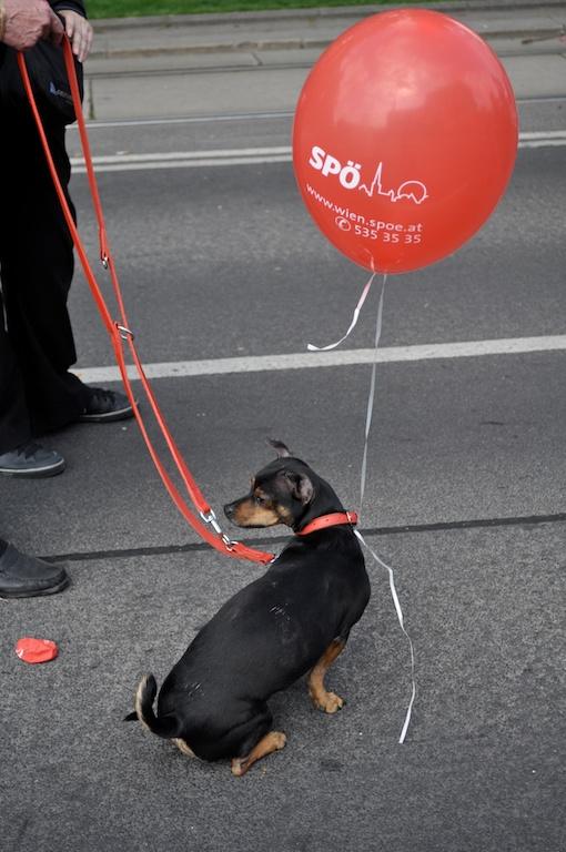 Roter Hund