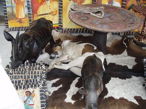HundesuchbildP5082095