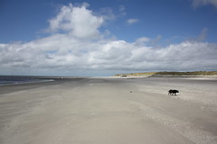 Daybreak on the sand (The Family Dog) Tags: light sea dog beach clouds sand dunes ameland