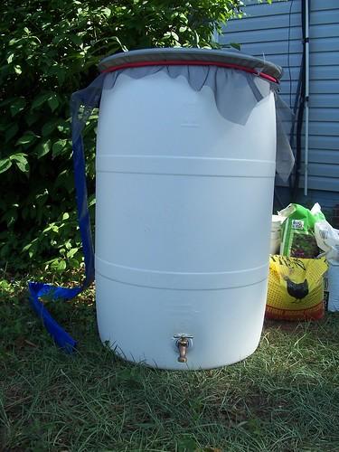 my rain barrel