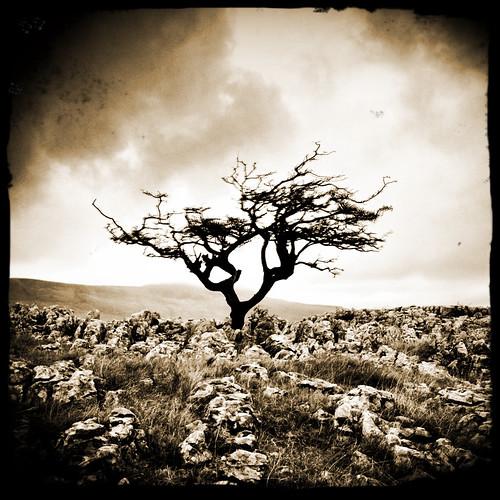 Lone Tree II