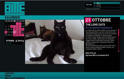 lovecatsbitte