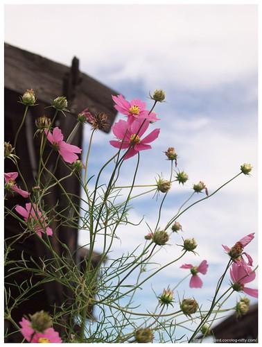Naraisyuku (Flowers) 101023 #03